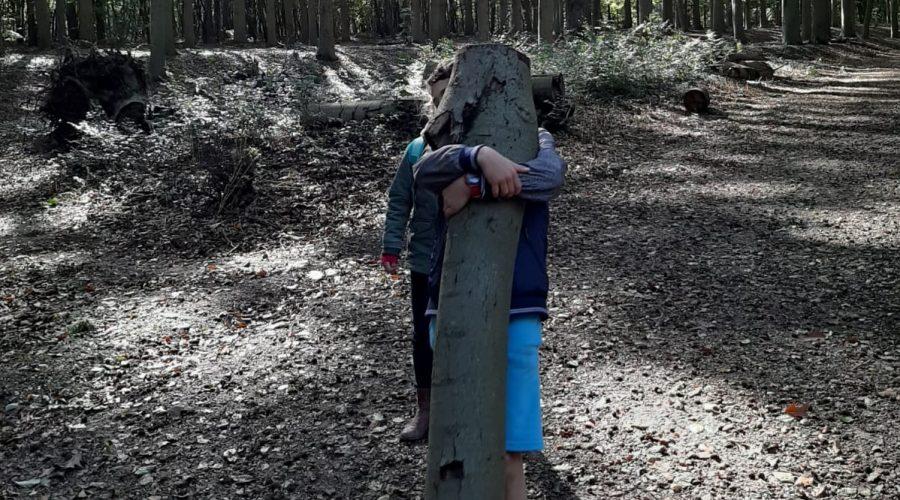 draagt omgehakte boomstam